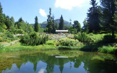 Un'estate tra fiori e stelle alle Viote del Monte Bondone